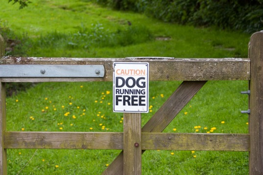 Dog Sign (1 of 1)