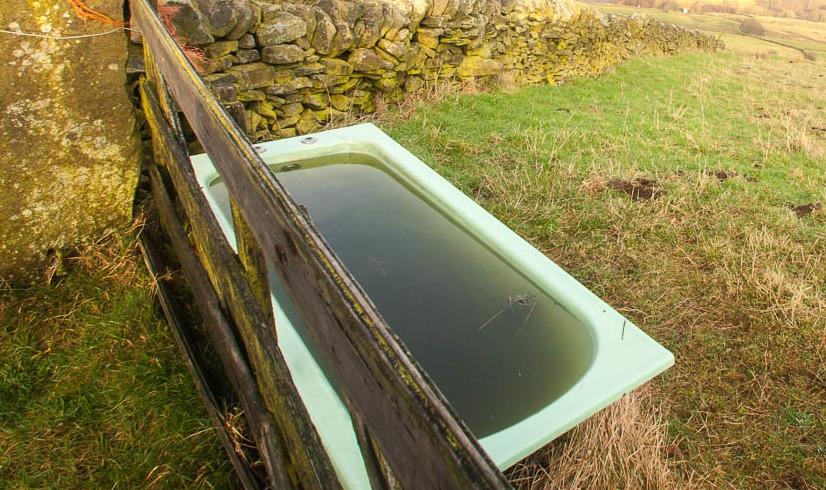 Bathtime (1 of 1)