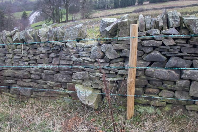 HOL 73 Fence obs (2)